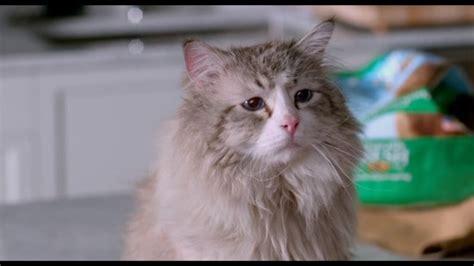 wont  watching  lives  conscious cat