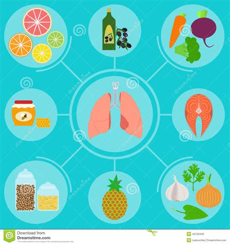 food for infographics of food for healthy lungs stock vector
