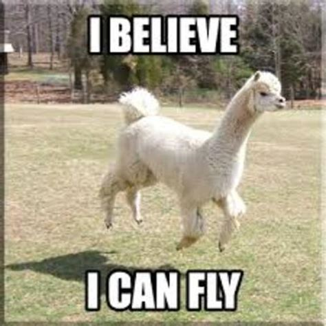 Funny Llama Memes - do you even llama stronger 24 7 stronger everyday