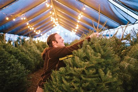 christmas tree farms boise the great tree shortage the 2017 supply is linked to fewer tree farms and a