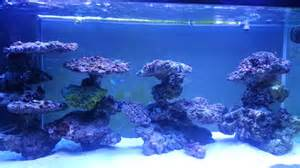 reef tank aquascaping on pvc