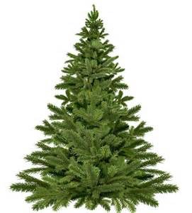 why you should plant a live christmas tree instead of a