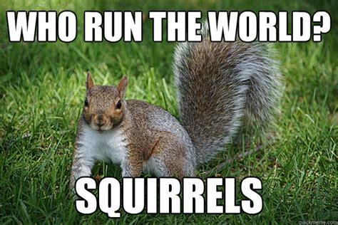 Funny Squirrel Memes - fat squirrel meme memes
