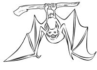 bumblebee bat coloring page learn about nature free bat coloring page learn about