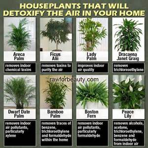 best houseplants for clean air how to grow cleaner air inside your home