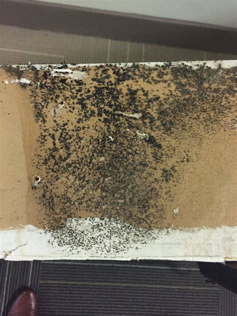 mold in apartment wall from the apartment tested