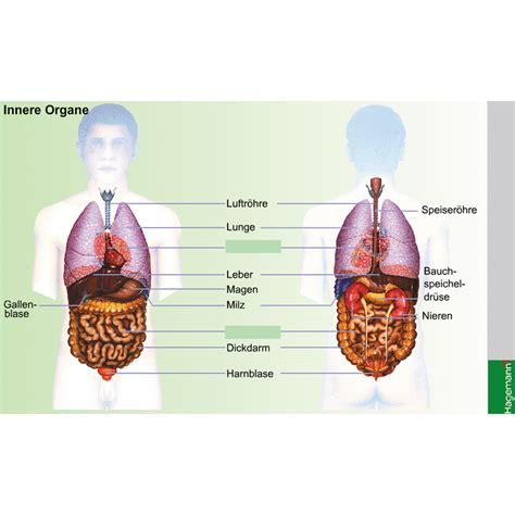 Der Mensch Innere Organe Gesundheit Und Krankheit W 22542