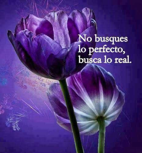 imagenes de flores llamadas pensamientos imagenes con flores y lindas reflexiones para whatsapp