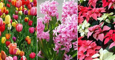 imagenes de flores ornamentales plantas ornamentales plantas