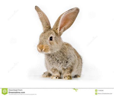 Jelly Rabbit Deer Flower Iphone 5 6 6 Plus7 7 Plus rabbit stock photo image of flemish
