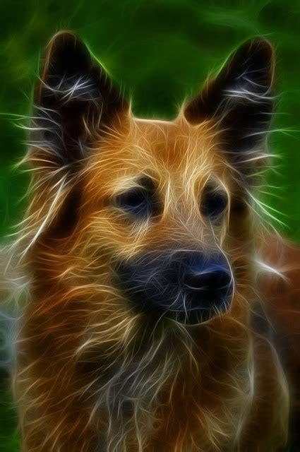 dog digital art fractal  image  pixabay