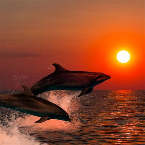 catamaran sunset cruise bali dolphins and whales by catamaran at sunset
