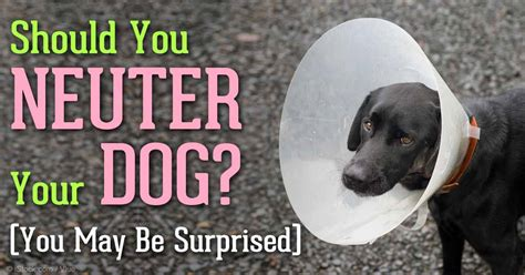 average cost of neutering a image gallery neutering dogs