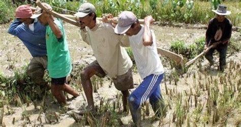 Obat Alat Pertanian alat pertanian tradisional yang masih digunakan di indonesia