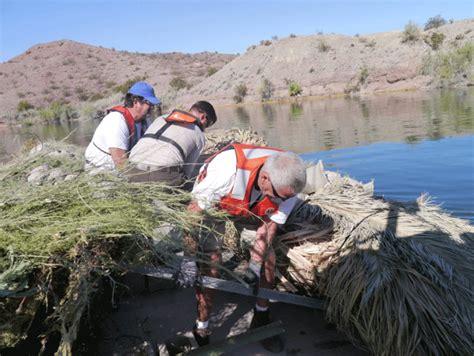 west marine lake havasu volunteers bolster lake havasu fish habitat program