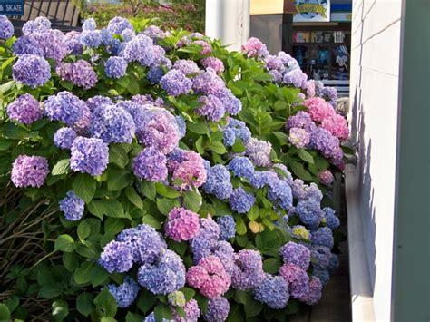 plantas para jardines plantas de sombra 9 opciones para el jard 237 n