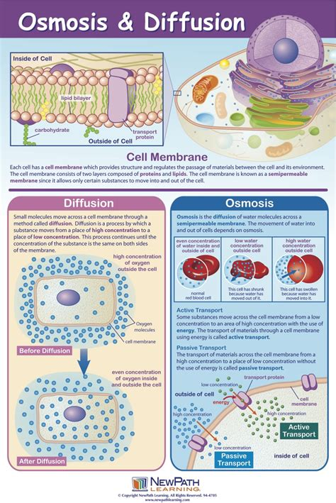 carbohydrates definition quizlet diffusion and osmosis mastering biology quiz