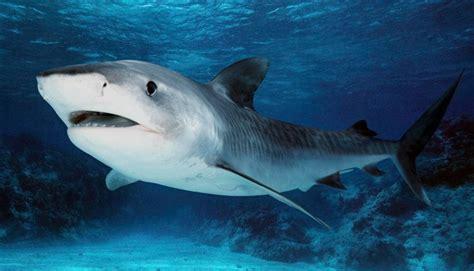 imagenes animales acuaticos fotos de animales marinos im 225 genes de animales marinos