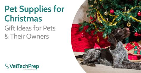 pet supplies for christmas gift ideas for pets their owners