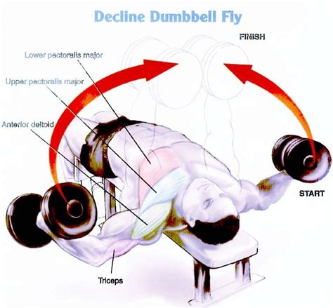 decline bench fly chest