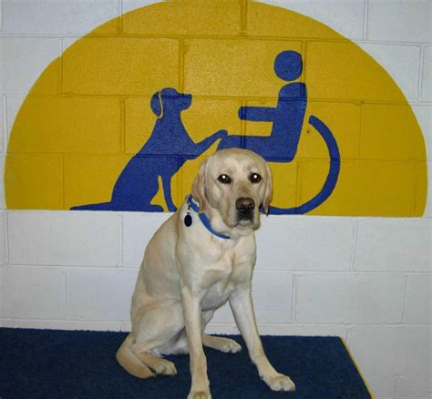 cci dogs canine companions for independence the r l executive