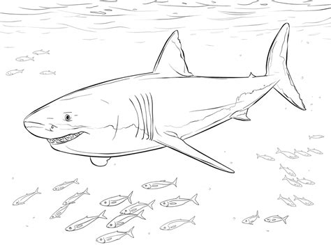 Big Shark Coloring Page | shark color pages activity shelter