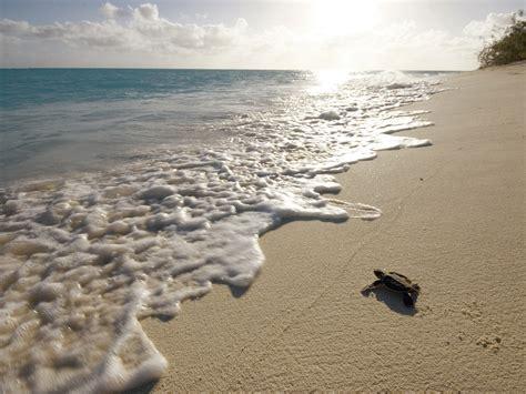 Heron Island   Capricorn Coast