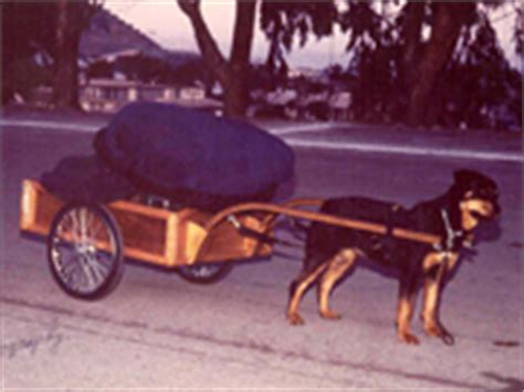 rottweiler pulling competition carting with neu rodes