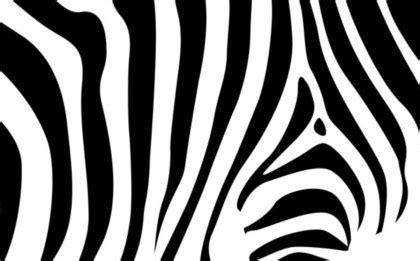 zebra pattern free download zebra pattern vector