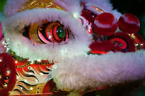 dragon boat racing sydney 2019 chinese new year in sydney 2019