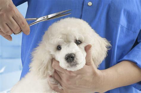 puppy grooming pet grooming jacksonville fl grooming