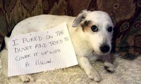 steal   balls   neighbourhood funny dog