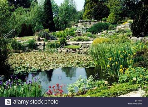 Botanical Garden Plants Cambridge Botanical Gardens Garden Water Ponds Plants Aquatic East Stock Photo Royalty Free