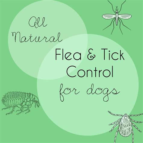 flea and tick all flea and tick for dogs this pug