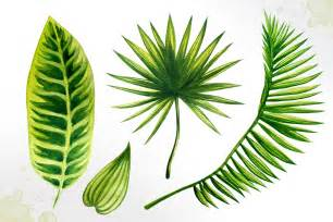tropical leaves watercolor vector alex green thehungryjpeg