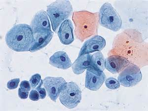 pap test metaplasia pap smear cytology site
