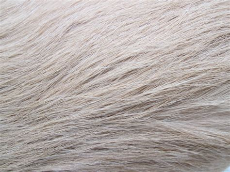puppy fur fur texture free stock photo domain pictures