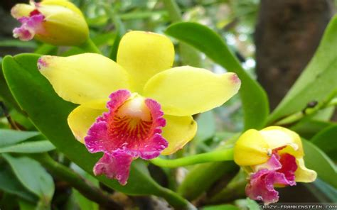 how to grow orchids blogs monitor