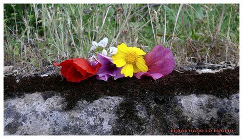 dai diamanti non nasce niente dal letame nascono i fior dai diamanti non nasce niente dal letame nascono i fiori
