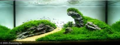 2009 aga aquascaping contest 27