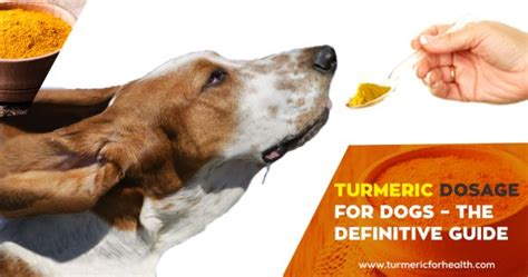turmeric for dogs dosage turmeric dosage for dogs the definitive guide