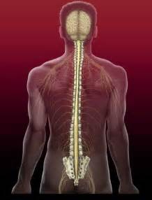 Brain And Spine Spinal Cord And Nerve Roots Cedars Sinai