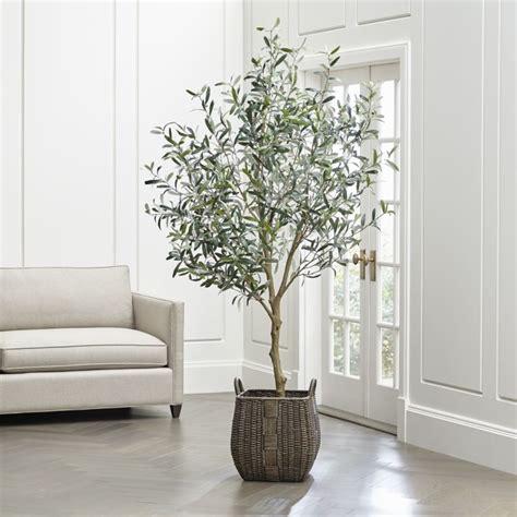 coltivazione in vaso ulivo in vaso frutteto coltivazione ulivo in vaso