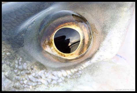 fish eye fish of martha s vineyard