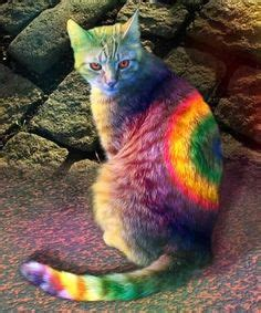 Inlander Rainbow 1000 images about colorful animals on pink