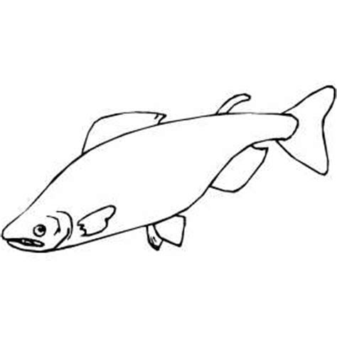 salmon template salmon coloring pages