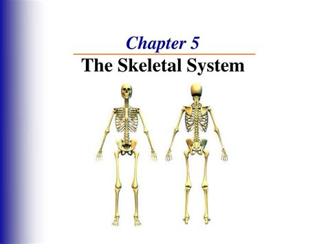 anatomy and physiology coloring workbook answers chapter 5 chapter 5 the skeletal system anatomy and physiology
