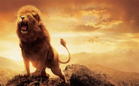 narnia lion aslan wallpapers hd wallpapers id
