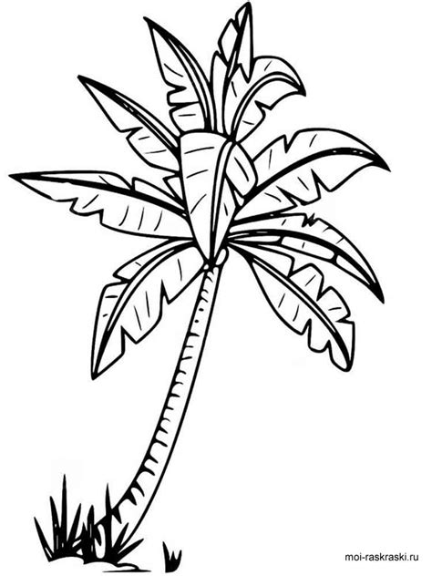 coloring page of palm leaves templates for palm leaf coloring page of a palm leaf