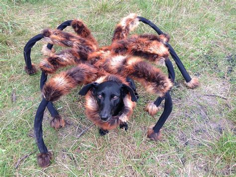 puppy spider of dressed in spider costume goes viral topics